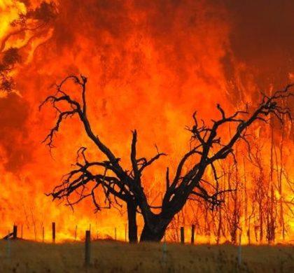 Beware Bushfire Fundraising Scams