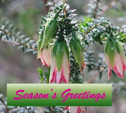 Seasons Greetings from OWN Qld